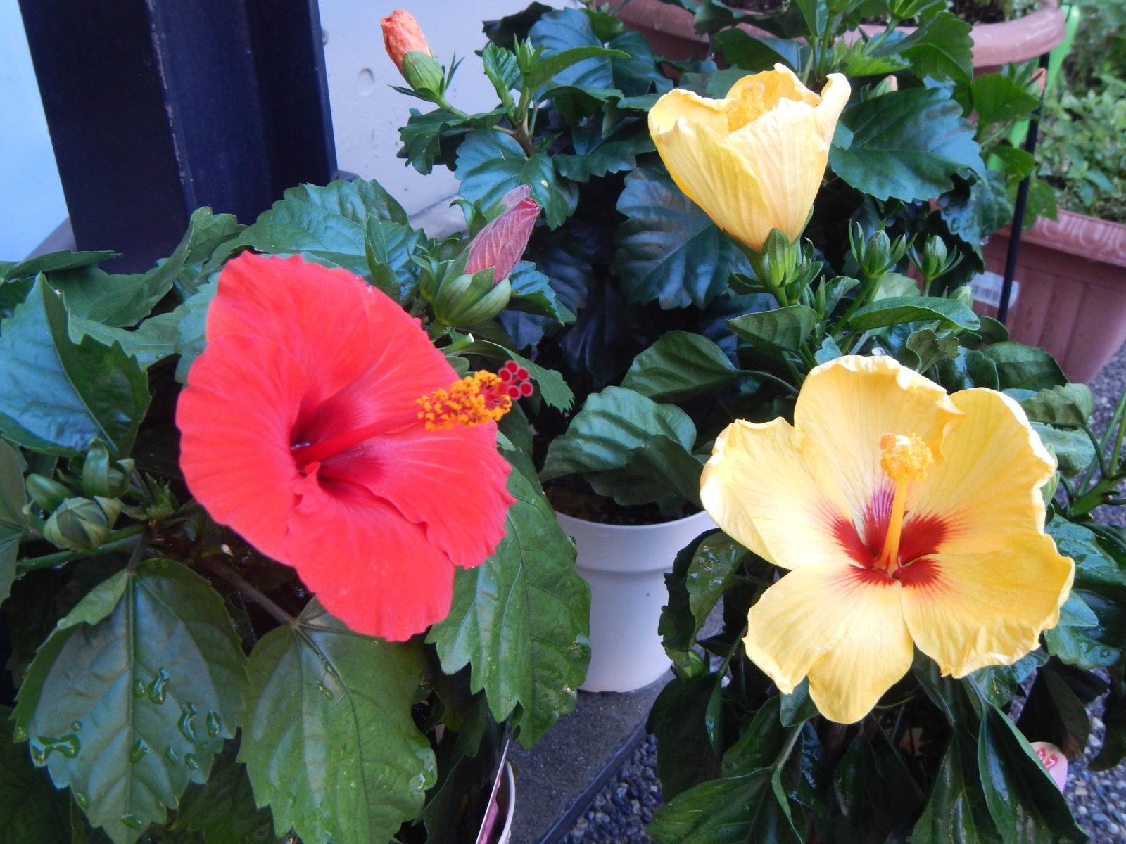 【デイサービスまごのて西陣】季節の花々